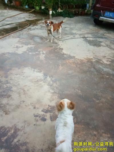 保山找狗,保山隆阳区找狗狗,有酬谢,狗狗名字叫龙龙,它是一只非常可爱的宠物狗狗,希望它早日回家,不要变成流浪狗。