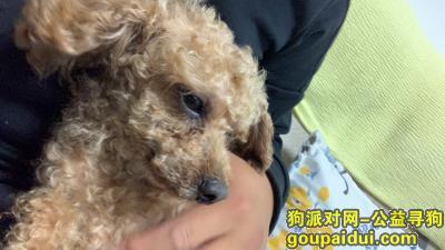 惠州寻狗启示,已领养,它是一只非常可爱的宠物狗狗,希望它早日回家,不要变成流浪狗。