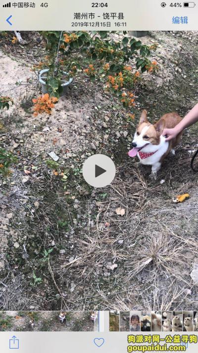 泉州寻狗启示,感激涕零,寻爱犬,悬赏2000元,它是一只非常可爱的宠物狗狗,希望它早日回家,不要变成流浪狗。