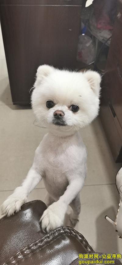 寻狗启示,请好心人捡到与我联系,它是一只非常可爱的宠物狗狗,希望它早日回家,不要变成流浪狗。
