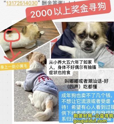 汕头寻狗网,奖金寻6年狗,拜托大家帮帮忙转发留意扩散,它是一只非常可爱的宠物狗狗,希望它早日回家,不要变成流浪狗。