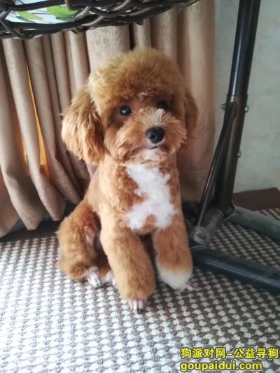 泸州找狗,泸州汽车站寻狗启示,希望能留意。,它是一只非常可爱的宠物狗狗,希望它早日回家,不要变成流浪狗。