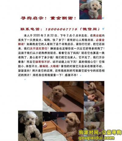 漳州找狗,看的朋友请联系必有重谢,它是一只非常可爱的宠物狗狗,希望它早日回家,不要变成流浪狗。