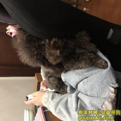 宿迁找狗,宿迁寻狗 重酬2000元,它是一只非常可爱的宠物狗狗,希望它早日回家,不要变成流浪狗。