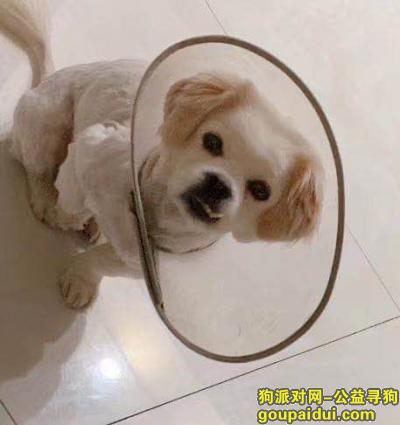 寻狗启示,急寻!!南昌安石路龙韵花园丢失一串串小狗,急寻!!,它是一只非常可爱的宠物狗狗,希望它早日回家,不要变成流浪狗。