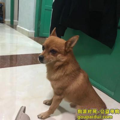 寻狗启示,九年老狗,西城商业大厦丢失,电话18654652810,它是一只非常可爱的宠物狗狗,希望它早日回家,不要变成流浪狗。