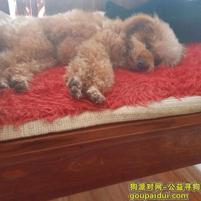 淄博寻狗启示,山东省淄博市桓台县走失爱犬,它是一只非常可爱的宠物狗狗,希望它早日回家,不要变成流浪狗。