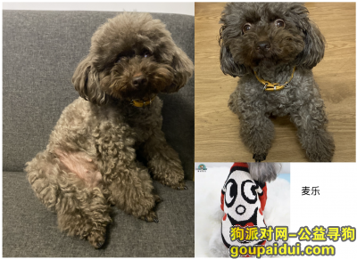 衢州寻狗网,衢州市江山市阳光新城走失爱犬,它是一只非常可爱的宠物狗狗,希望它早日回家,不要变成流浪狗。