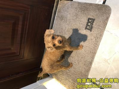 南宁寻狗主人,寻主人 昨日2.27日晚23时,在邕宾立交下捡到成年贵宾一只,剪了毛,寻找它的主人,,它是一只非常可爱的宠物狗狗,希望它早日回家,不要变成流浪狗。