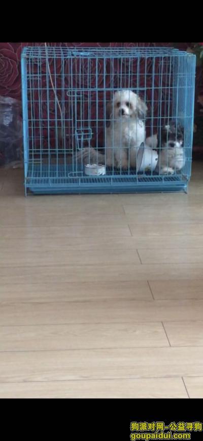 ,,它是一只非常可爱的宠物狗狗,希望它早日回家,不要变成流浪狗。