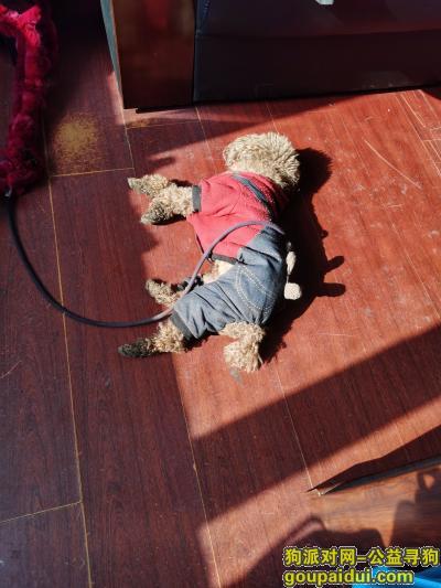 齐齐哈尔寻狗网,3月2日上午在铁东大市场检到,它是一只非常可爱的宠物狗狗,希望它早日回家,不要变成流浪狗。