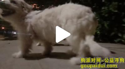 扬州寻狗启示,一只小白狗在2月29号晚上丢失,看到的人请速速联系我谢谢,它是一只非常可爱的宠物狗狗,希望它早日回家,不要变成流浪狗。