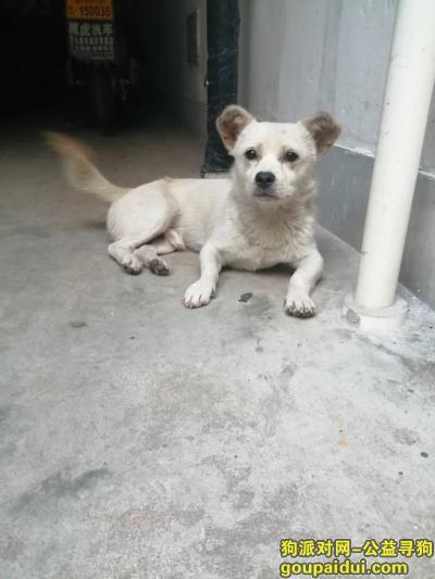 宁波寻狗网,在线寻找丢失的小土狗,它是一只非常可爱的宠物狗狗,希望它早日回家,不要变成流浪狗。