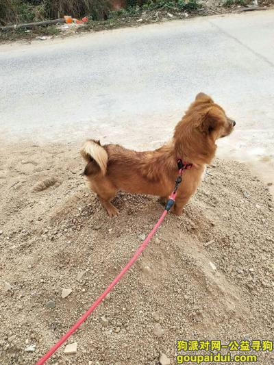 玉林寻狗网,拜托帮忙找找我的旺存,它是一只非常可爱的宠物狗狗,希望它早日回家,不要变成流浪狗。