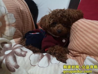 池州寻狗启示,一周岁小泰迪,秋浦中路,下午四点,它是一只非常可爱的宠物狗狗,希望它早日回家,不要变成流浪狗。