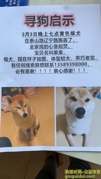 青岛找狗,求扩散、让小毛孩早日回家,它是一只非常可爱的宠物狗狗,希望它早日回家,不要变成流浪狗。
