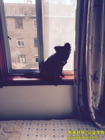 ,家养犬小黑丢失望好心人看到联系,它是一只非常可爱的宠物狗狗,希望它早日回家,不要变成流浪狗。