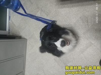 威海捡到狗,谁家毛孩子走丢了赶紧来领,它是一只非常可爱的宠物狗狗,希望它早日回家,不要变成流浪狗。