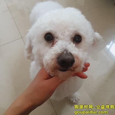 曲靖找狗,本人爱犬于3月6日晚走失望好心人帮忙寻找,它是一只非常可爱的宠物狗狗,希望它早日回家,不要变成流浪狗。
