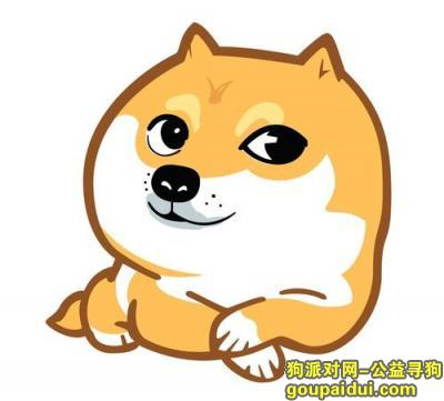 ,谁家萨摩耶丢了快来取,它是一只非常可爱的宠物狗狗,希望它早日回家,不要变成流浪狗。