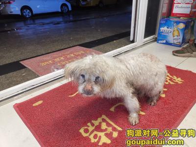 长沙寻狗主人,在开福区陡岭路捡到一只白色狗,它是一只非常可爱的宠物狗狗,希望它早日回家,不要变成流浪狗。