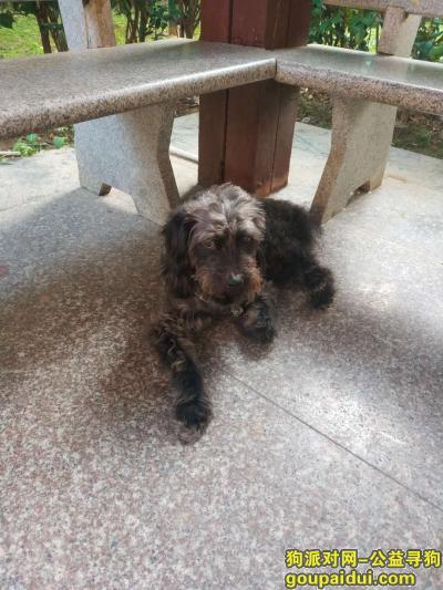 南宁找狗主人,广西南宁市青秀区寻狗主人,它是一只非常可爱的宠物狗狗,希望它早日回家,不要变成流浪狗。