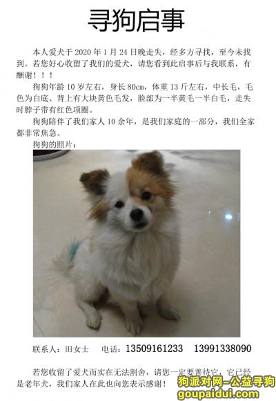 ,急寻狗狗,走失一个多月了!,它是一只非常可爱的宠物狗狗,希望它早日回家,不要变成流浪狗。