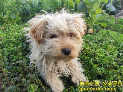 泰州寻狗,2020年3月7号上午10点在海陵区罡杨镇杨庄丢失,它是一只非常可爱的宠物狗狗,希望它早日回家,不要变成流浪狗。