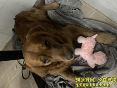 宜春寻狗网,在宜春香樟儿童城捡到的狗主人看的和我联系,它是一只非常可爱的宠物狗狗,希望它早日回家,不要变成流浪狗。