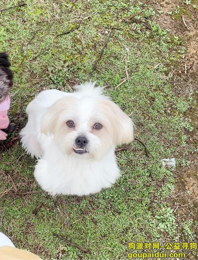 怀化寻狗,请帮助我寻找小狗回家。万分感谢。他很乖,胆子小。,它是一只非常可爱的宠物狗狗,希望它早日回家,不要变成流浪狗。