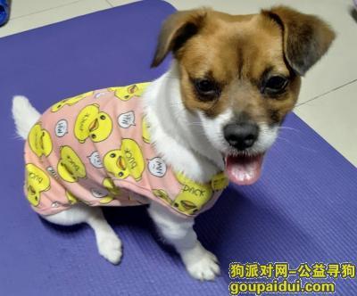 【广州找狗】,愿好心人送她回家吧!,它是一只非常可爱的宠物狗狗,希望它早日回家,不要变成流浪狗。