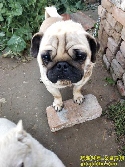 盐城寻狗启示,射阳捡到一只小狗请帮小狗回家,它是一只非常可爱的宠物狗狗,希望它早日回家,不要变成流浪狗。