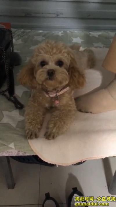 沭阳寻狗网,寻找爱犬,它是一只非常可爱的宠物狗狗,希望它早日回家,不要变成流浪狗。