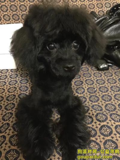 台州寻狗启示,台州椒江洪家街道 寻狗启示,它是一只非常可爱的宠物狗狗,希望它早日回家,不要变成流浪狗。
