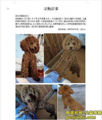 宁波寻狗启示,寻找一只可爱的泰迪狗狗,它是一只非常可爱的宠物狗狗,希望它早日回家,不要变成流浪狗。