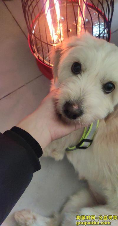,家里一条狗狗跑出去了,一天没回家了,有看到的麻烦联系一下,它是一只非常可爱的宠物狗狗,希望它早日回家,不要变成流浪狗。
