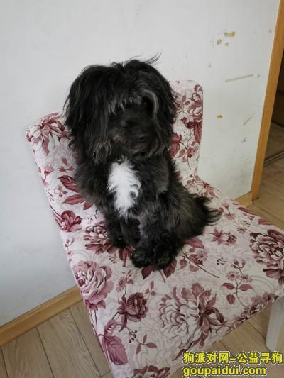 嘉兴寻狗启示,胆子太小,别到处跑啊,等你回家,它是一只非常可爱的宠物狗狗,希望它早日回家,不要变成流浪狗。