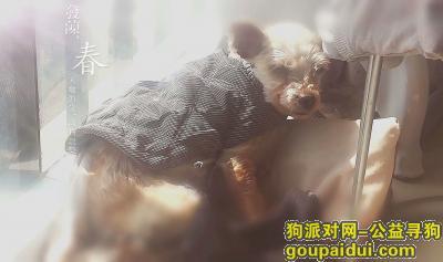 合肥丢狗,在蜀山区翠宁雅苑3月20号丢失一只串串狗,它是一只非常可爱的宠物狗狗,希望它早日回家,不要变成流浪狗。