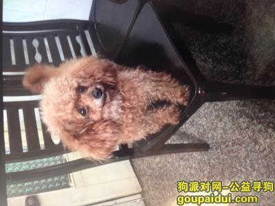 温州找狗,有望好心人看到它,能与我联系,拜托了!!!,它是一只非常可爱的宠物狗狗,希望它早日回家,不要变成流浪狗。