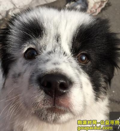 武汉寻狗启示,家里狗狗丢了,有好心看到麻烦联系,有酬谢!!!,它是一只非常可爱的宠物狗狗,希望它早日回家,不要变成流浪狗。