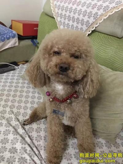 ,狗狗走失,养了八年,很着急,它是一只非常可爱的宠物狗狗,希望它早日回家,不要变成流浪狗。