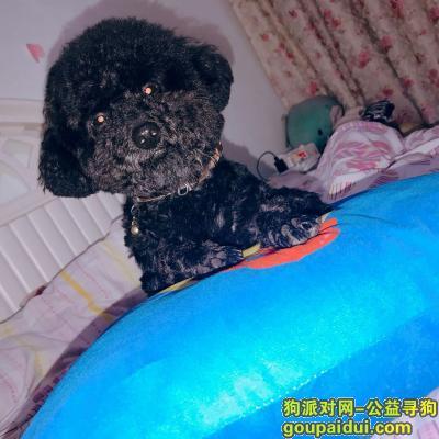 绵阳找狗,重金寻找丢失的爱犬,通州府丢失,它是一只非常可爱的宠物狗狗,希望它早日回家,不要变成流浪狗。