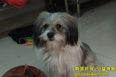 泉州找狗,在福建晋江陈埭镇涵口村温馨公寓旁走失,如果找到必有重酬!,它是一只非常可爱的宠物狗狗,希望它早日回家,不要变成流浪狗。