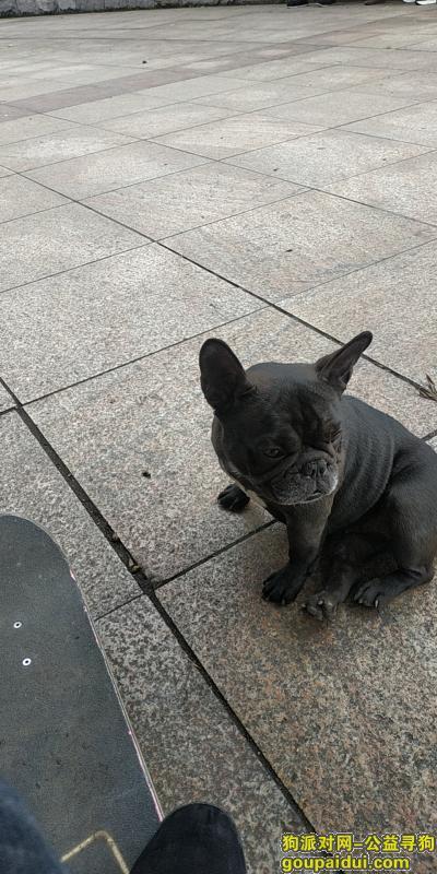 娄底寻狗启示,冷水江波月洞丢失2岁黑色龅牙法斗犬,它是一只非常可爱的宠物狗狗,希望它早日回家,不要变成流浪狗。