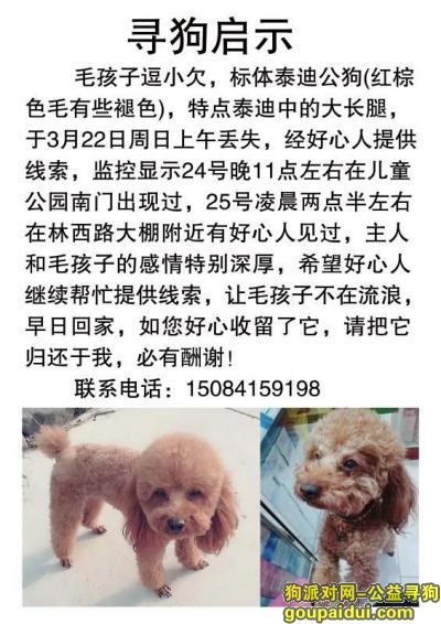 ,寻狗泰迪酬金10000,它是一只非常可爱的宠物狗狗,希望它早日回家,不要变成流浪狗。