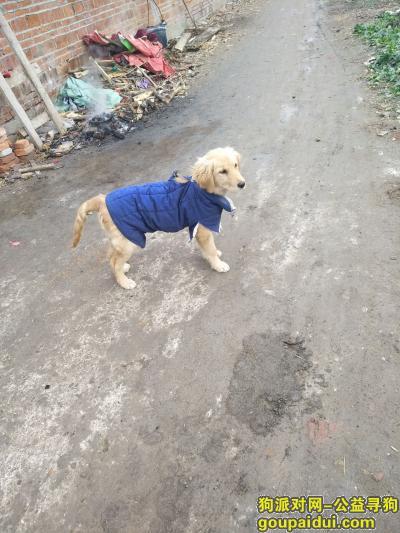 宿迁寻狗启示,我家狗不见了,如果有人找到,联系我们,谢谢!,它是一只非常可爱的宠物狗狗,希望它早日回家,不要变成流浪狗。
