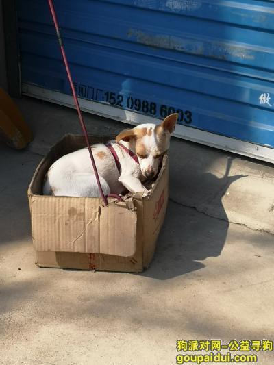 合肥寻狗启示,长江东路与顺祥路交口附近丢失一条小白狗,它是一只非常可爱的宠物狗狗,希望它早日回家,不要变成流浪狗。