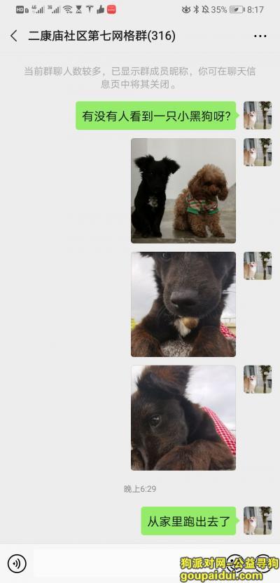 赣州找狗,寻找小黑狗,品种土狗串泰迪,它是一只非常可爱的宠物狗狗,希望它早日回家,不要变成流浪狗。