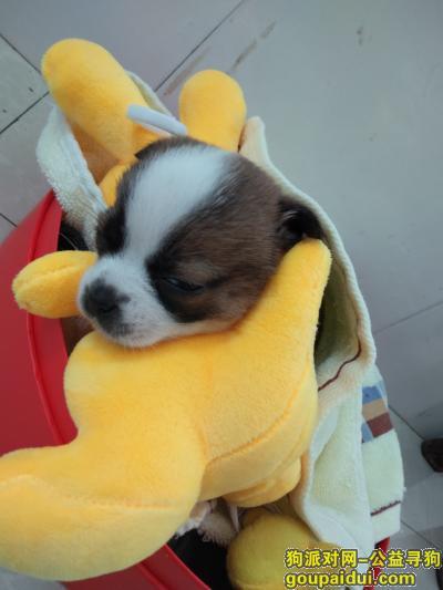 怀化寻狗启示,爱犬走失 烦请拾到者联系,它是一只非常可爱的宠物狗狗,希望它早日回家,不要变成流浪狗。