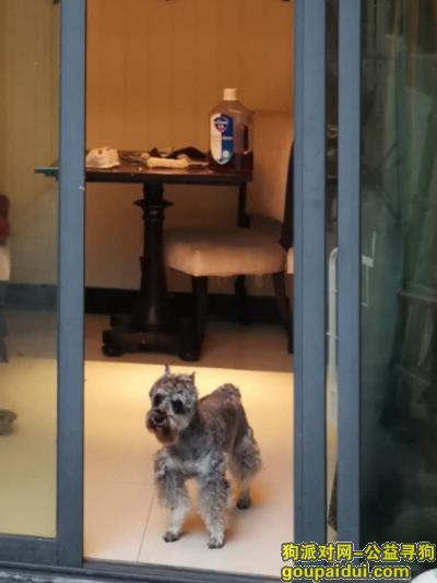 ,小狗29号在江门奕聪花园跑丢,它是一只非常可爱的宠物狗狗,希望它早日回家,不要变成流浪狗。